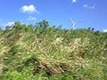 kawailoa Wind Farm 1140 km